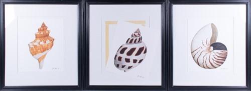 Lot 66-John Matthew Moore (XX-XXI) 'Sea Shells', offset...